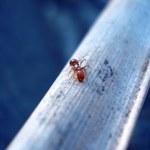 Anternet, czyli jak mrówki wymyśliły protokół TCP