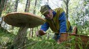 Antyrakowa porcja grzybów