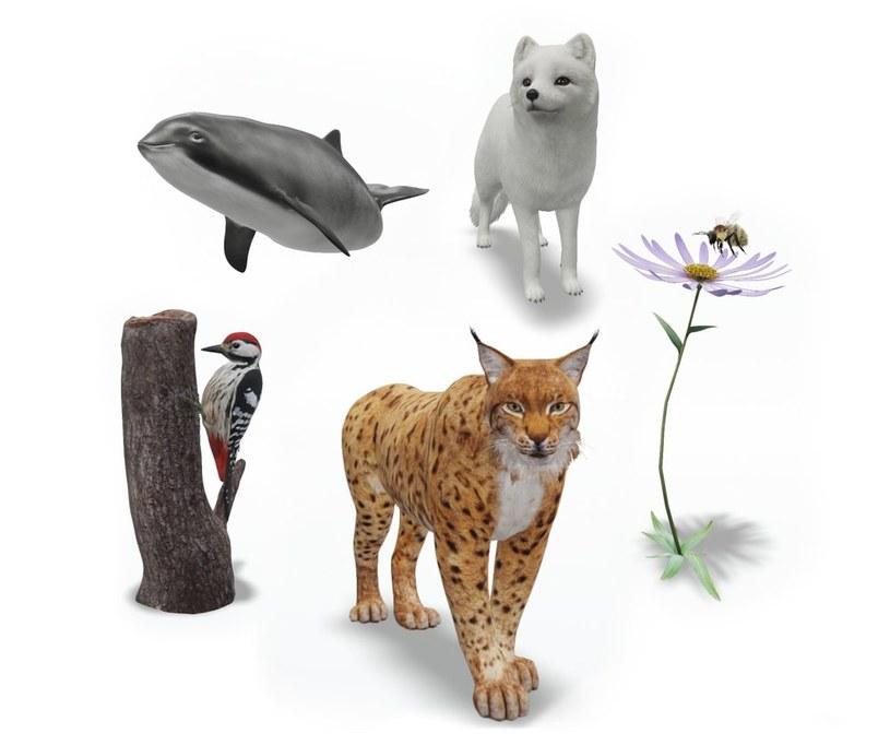 Aplikacja przedstawia pięć zagrożonych wyginięciem gatunków /Google