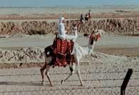 Arab w stroju beduińskim /Encyklopedia Internautica