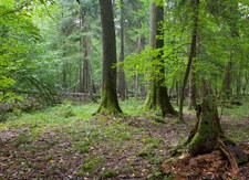 Arabia Saudyjska: Zasadzimy 10 mld drzew na pustyni