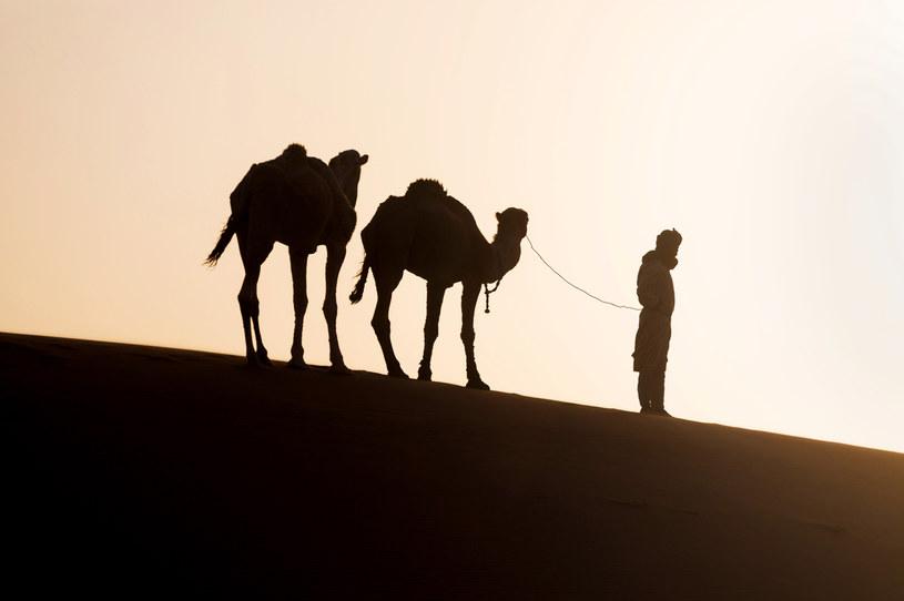 Arabowie zasadzą na pustyniach 50 mld drzew... /123RF/PICSEL