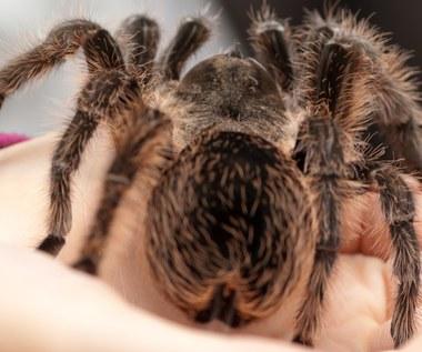 Arachnofobia: Co to jest, objawy, jak leczyć?
