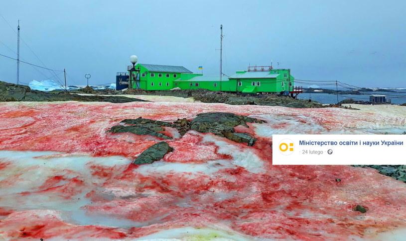 Arbuzowy śnieg wokół stacji badawczej na antarktycznej wyspie Galindez /Facebook /facebook.com