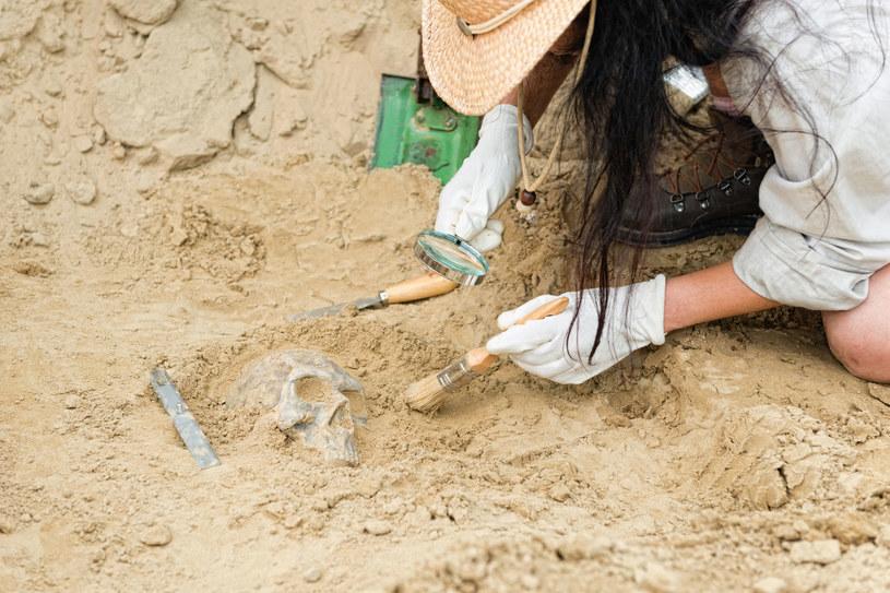 Archeolog w czasie pracy, zdj. ilustracyjne /123RF/PICSEL