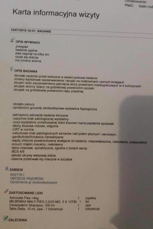 Archiwum właścicielki psa /INTERIA.PL