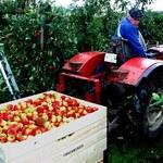 ARiMR - limit pomocy dla sadowników wyczerpany w jeden dzień