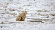 Arktyka - dobro wspólne