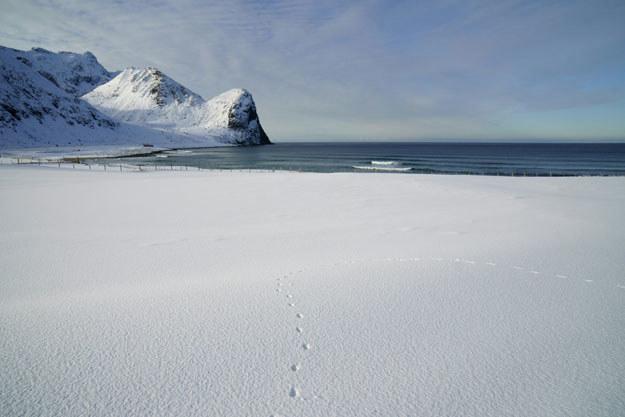 """""""Arktyka przechodzi kryzys"""" /AFP"""