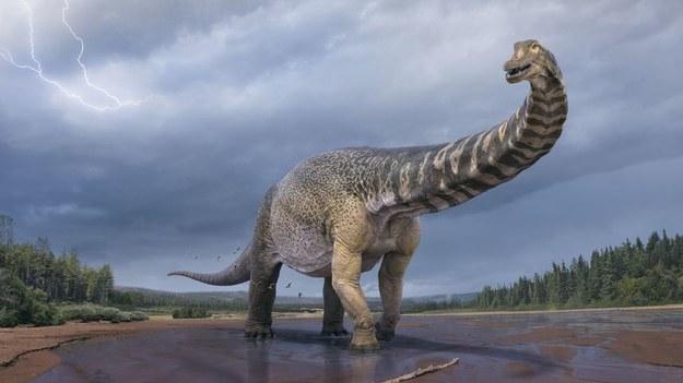 Artystyczna wizja największego dinozaura Australii / QUEENSLAND MUSEUM /Materiały prasowe