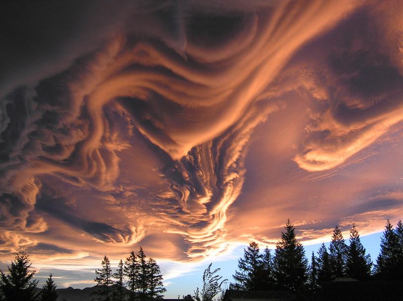 Asperatus nad Nową Zelandią - zdjęcie krążące po internecie (autor nieznany) /Internet