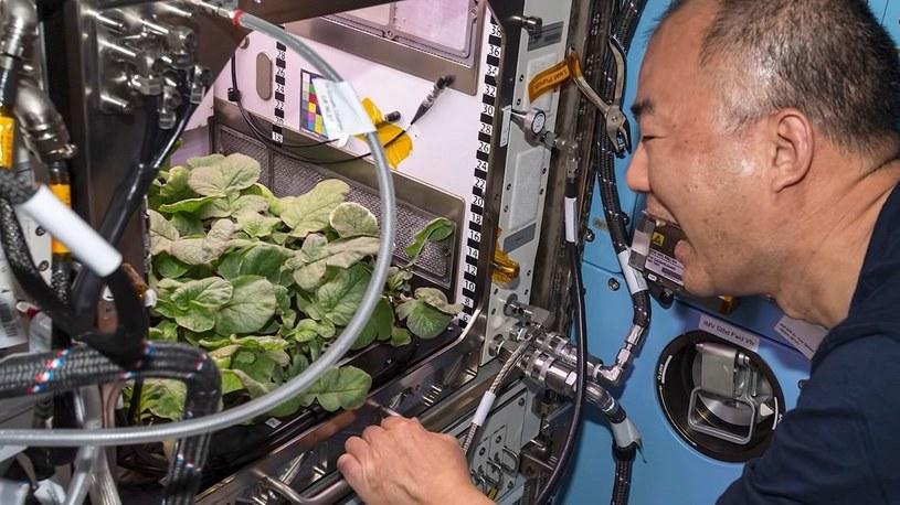 Astronauci zjedli rzodkiewki wyhodowane przez siebie w kosmicznym domu [FILM] /Geekweek