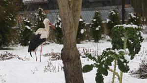Atak zimy. Połamane drzewa, problemy z dostawą prądu