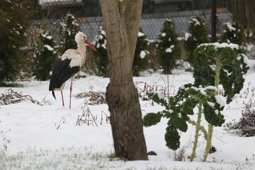 Atak zimy zaskoczył mieszkańców południowej Polski /Anatol Chomicz/Polska Press /East News
