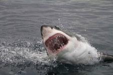 Australia: Dwa ataki rekinów w ciągu 24 godzin
