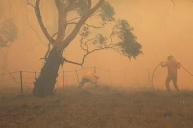 """Australia: To koniec """"czarnego lata""""? Opanowano wszystkie pożary w Nowej Południowej Walii"""