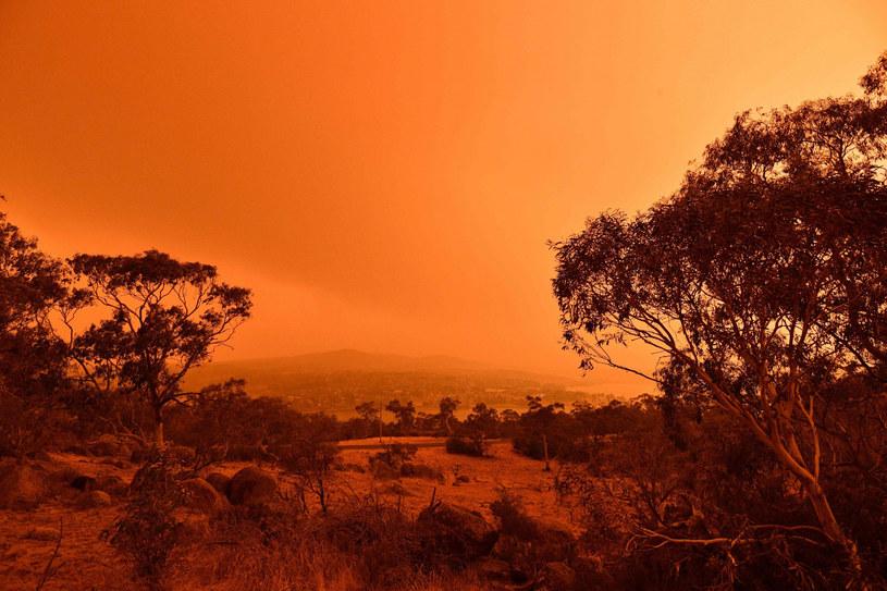 Australia walczy z pożarami /SAEED KHAN/AFP /East News