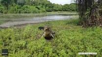 Australijski wędkarz stoczył walkę o swój połów z… krokodylem