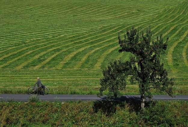 Aż o 12 procent wzrosła cena ziemi w 2011 r. /AFP