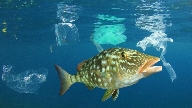 Bąbelki powietrza ochronią światowe oceany przed górami plastikowych śmieci /Geekweek