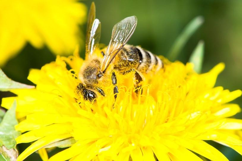 Badacze zwracają uwagę na potrzebę ochrony owadów /Piotr Kamionka /Reporter