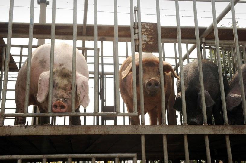 Badane są okoliczności śmierci zwierząt /AFP