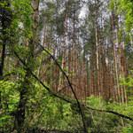 Badanie ujawniło skuteczność ochrony lasów na całym świecie