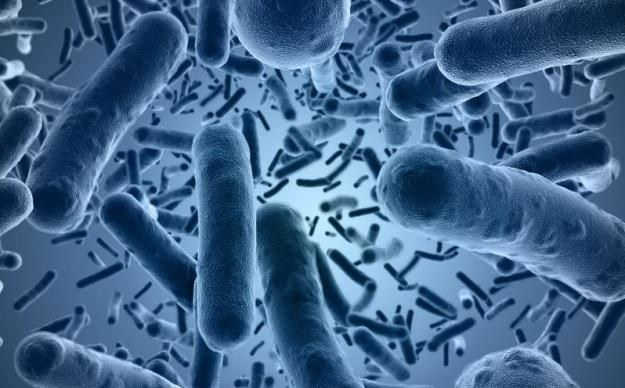 Bakterie coraz trudniej pokonać przy pomocy antybiotyków /123RF/PICSEL