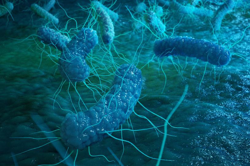 Bakterie salmonelli są szeroko rozpowszechnione u zwierząt domowych i dzikich /123RF/PICSEL