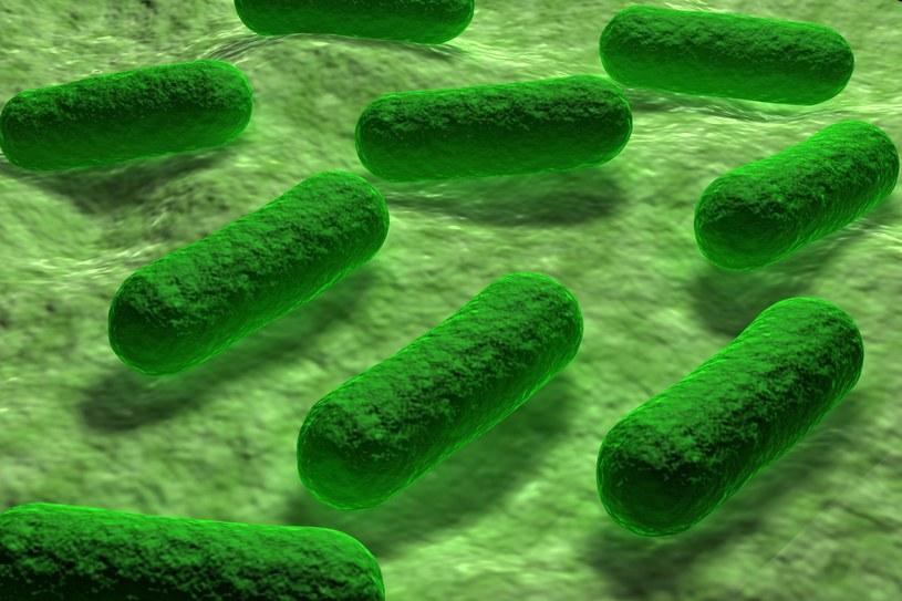 Bakterie stają się coraz groźniejsze /123RF/PICSEL