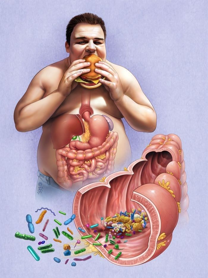 Bakterie w organizmie człowieka /© Photogenica