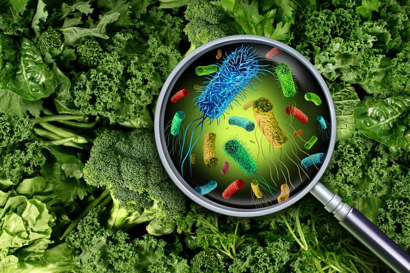 Bakterie w żywności /©123RF/PICSEL