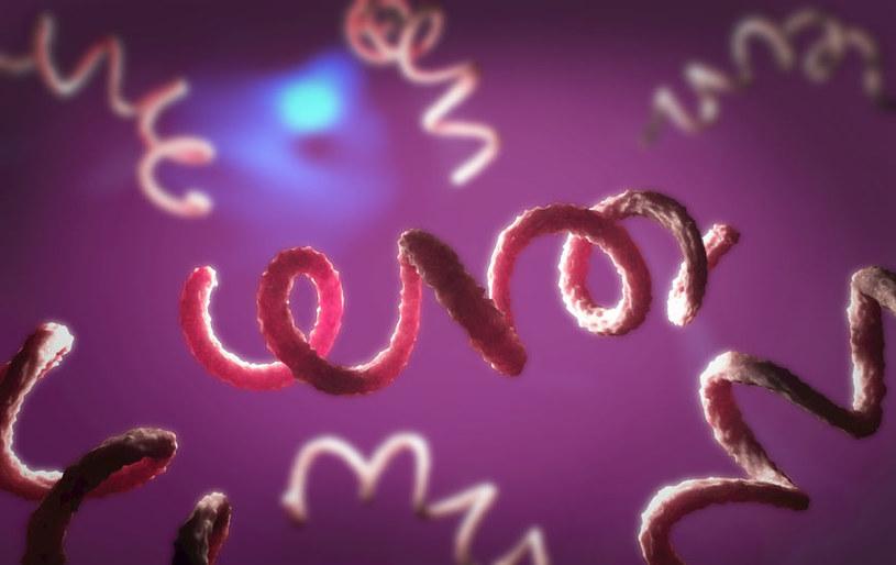 Bakterie wywołujące kiłę /©123RF/PICSEL