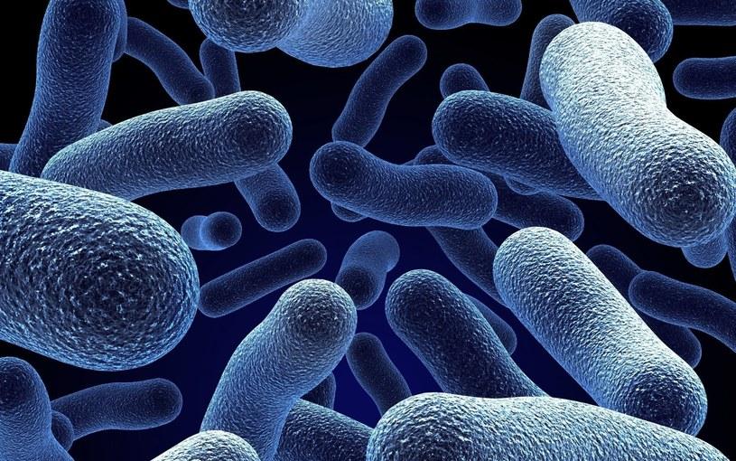 bakterie /© Photogenica