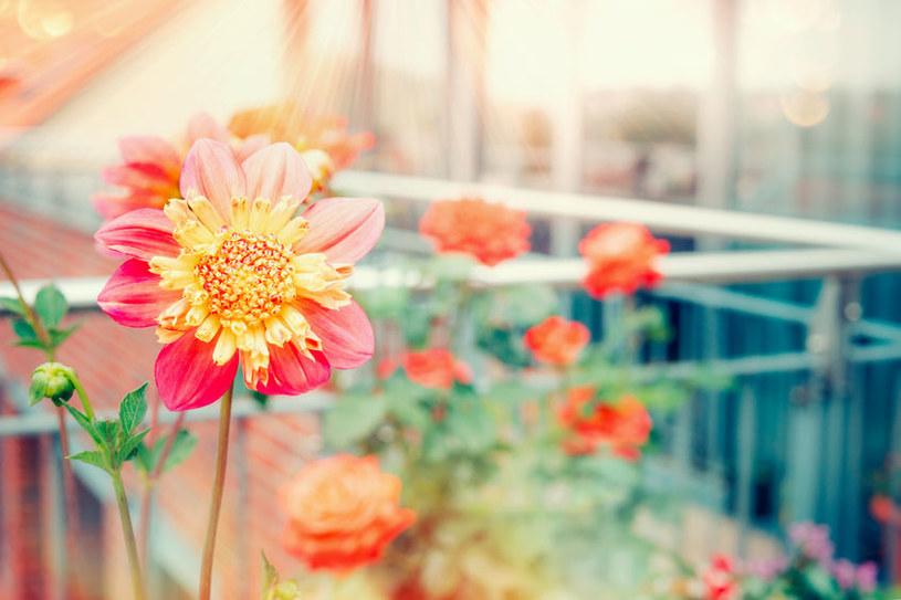 Balkon jesienią /©123RF/PICSEL