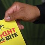 """""""Bardzo małe ryzyko"""" szerzenia się wirusa Zika"""
