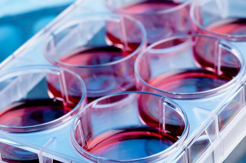 Barwniki w laboratorium /©123RF/PICSEL