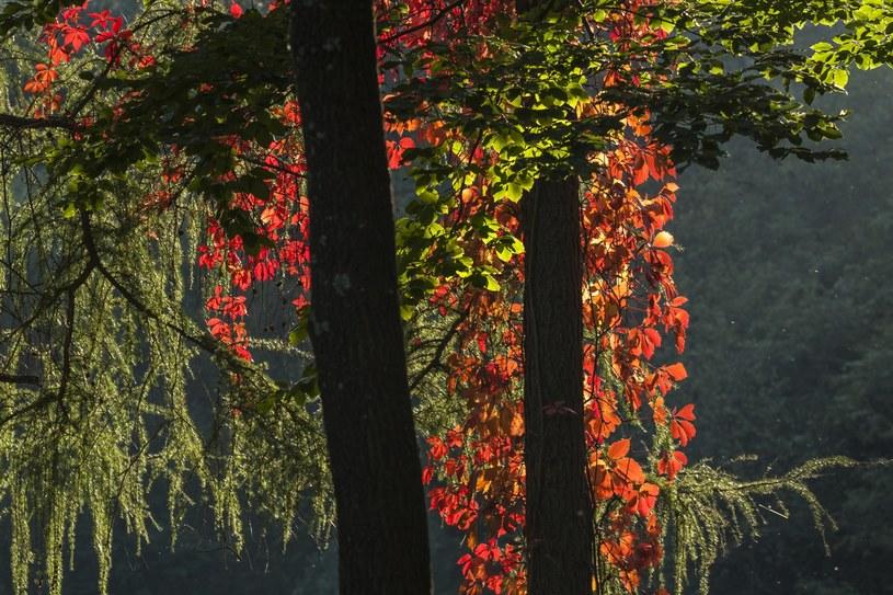 Barwy jesieni /Dawid Tatarkiewicz /East News
