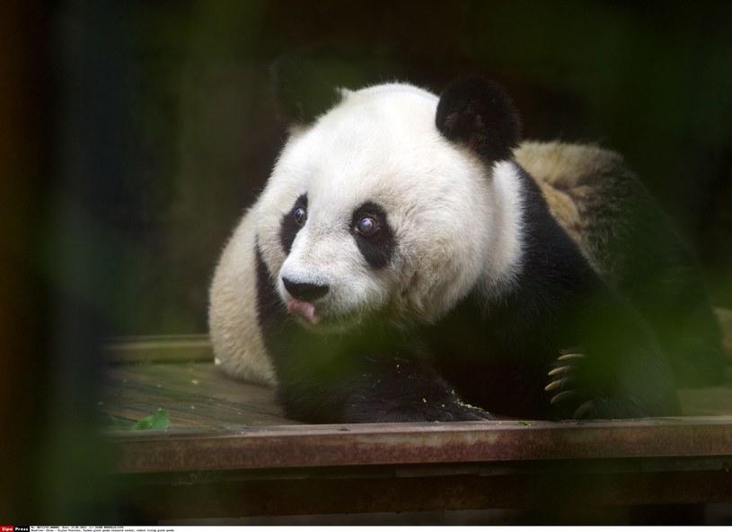 Basi miała 37 lat /CHINE NOUVELLE/SIPA /East News