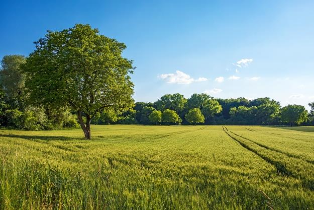 Będą duże zmiany w handlu ziemią w Polsce /©123RF/PICSEL
