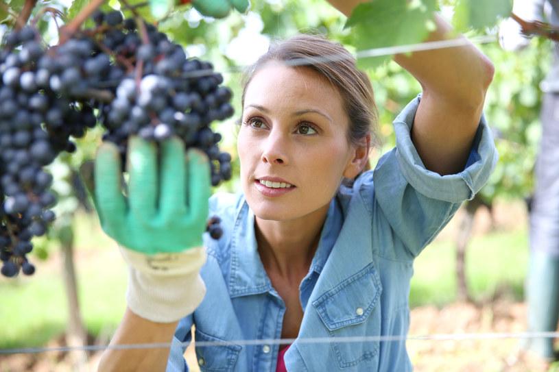 Będą nowe limity dla polskich winiarzy /123RF/PICSEL