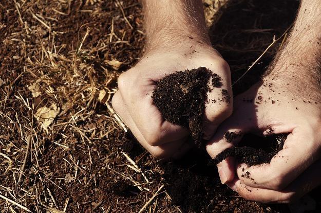 Będzie moratorium na sprzedaż państwowej ziemi? /©123RF/PICSEL