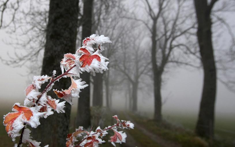 Będzie pochmurno, wilgotno i jeszcze chłodniej /AFP
