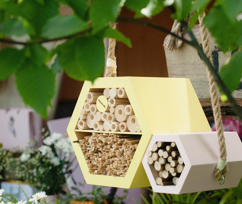 #beeYOPE pomaga pszczołom samotnicom i innym owadom zapylającym /INTERIA.PL/materiały prasowe