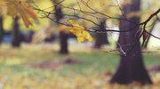 Belgia: Król Filip straci ogromny park w stolicy?