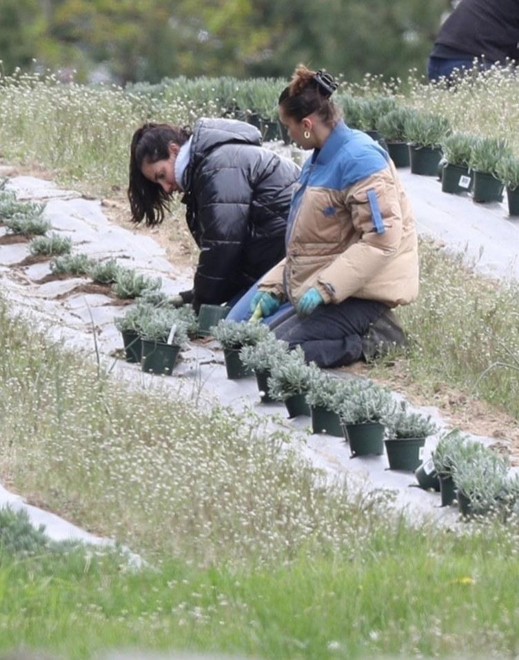 Bella Hadid z mamą sadzą zioła /BACKGRID /East News