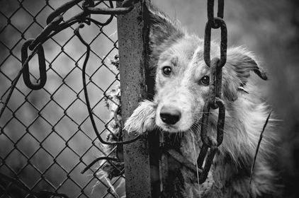 Bestialskie przywiązywanie psa do drzewa wciąż zdarza się w Polsce często /123RF/PICSEL