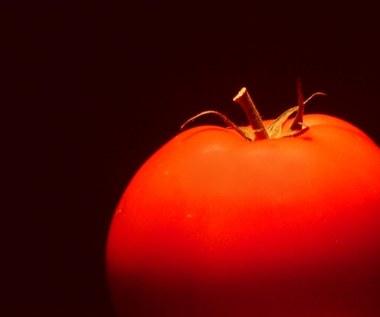 Bez roślin GMO rolnictwo w Unii Europejskiej upadnie