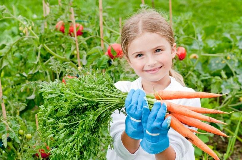bezpieczna żywność /© Photogenica