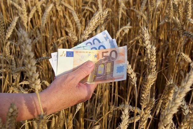 Bezumowni brali dopłaty nawet nie uprawiając ziemi? /©123RF/PICSEL